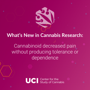 Cannabinoid decreased pain without producing tolerance or dependence